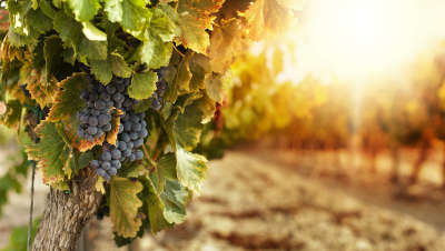 Wine-Loving-Bride-Winery-Tour