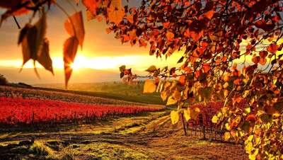 Wine Bazaar Background Picture-2